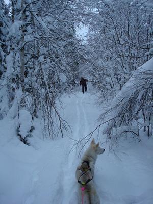Kinderåsen. Det här är vinter för mig. Pappa spårar i den djupa snön, och jag och Freja åker efter.