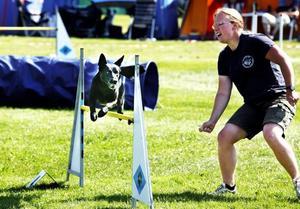 Elida Nordlings hund Java flyger över hindret. De tävlar med laget Fina Flygande Fighters.