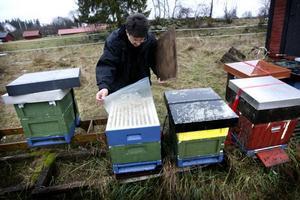 Hallå, är det någon hemma? Matias Köping tittar till sina bin, som inte verkar vara särskilt intresserade av att få besök. De ligger mest och trycker. Ett ensamt förvirrat bi lämnar kupan och tar en flygtur, trots att det inte är mer är fem grader i luften. För att bina ska fungera behöver de ha minst åtta grader varmt.