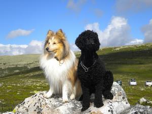 Lillen och Olle spanar efter renat på Nipfjället i Idre