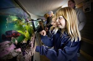 Tuva Elfström, 9 år, och Matilda Revell, 7 år, i djurtunneln.
