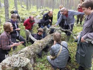 Från forskningsresan i skogarna kring Venjan och Mångsbodarna.