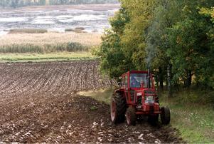 Höstplöjning. Bonde i traktor. Åker, lantbruk. Öppet landskap. Teg, fåror. Träd.Foto: Björn Larsson Ask/SCANPIX