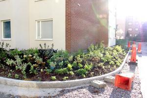 Runda skuggplanteringar med pollinerande växter.