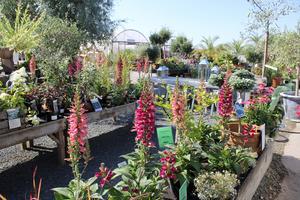 Trots tryckande värme blommar det i rabatterna. Här tas växterna väl om hand och vattnas flera gånger om dagen.