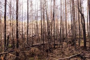 På Storbrättan brann det för fullt vid tiden för Lillhärdalsyran förra året. Röken både syntes och kändes nere i byn.