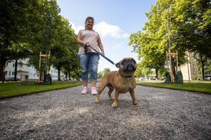 Åsa Nilsson är på promenad i Rådhusesplanaden med sin franska bulldog Bosse.