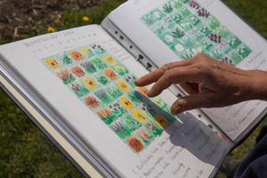Bakom snittblomsodlingen på Skillebyholm ligger noggrann planering av färger och former.