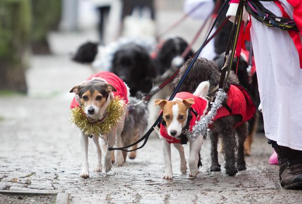 Hundarna var ekiperade med var sin kappa.