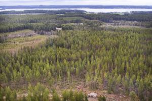 Med hjälp av laserskanning från ovan ska skog i länet och i övriga landet analyseras och skattas. Foto: Robert Henriksson.