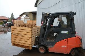 Ungefär 20 bingar blir det för varje traktorvagn som rullar in på gården.
