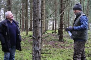 Jan -Olof Källström, By Folkärna pastoratet och skogsmästare Daniel Ersson, Västerås stift,  studerar en av de granar vid Utsundsbadet som visar tydliga tecken på angrepp från granbarkborre.