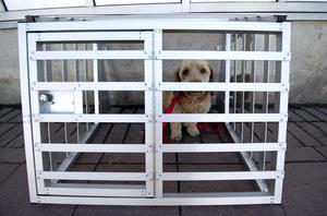 Insändarskribenten ondgör sig över att länsstyrelsen tillåtit att en hundägare misskött sina hundar under flera år. Bland annat genom att ha dem i trånga och smutsiga utrymmen. Hunden på bilden har inte med det omskrivna fallet att göra. Foto: Adam Ihse/TT