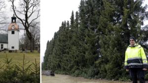 """Därför kapas granarna på kyrkogården bort – blåste ned över gärdesgård: """"Är en säkerhetsrisk"""""""