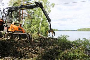 Totalt ska 400 träd tas bort på vallen kring Olof-Jons dammen.