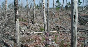 Torsburgens naturreservat härjades av branden i Kräklingbo. Foto: Länsstyrelsen Gotlands län.