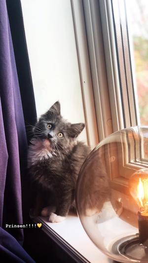 248) Här är världens mysigaste katt Morris! Han är 4 månader gammal och det bästa han vet är sovmorgon och att titta på hockey. Foto: Lovis Jönsson