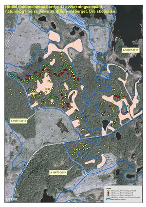 Punkterna i gult, rött och grönt visar var det finns skyddsvärda arter i ett område Sveaskog nu ska avverka vid Brännvinsberget norr om Furudal i Rättviks kommun. Det ljusa är hänsynsytor som ska sparas enligt Sveaskogs mosaikhuggningsmetod, men där finns inte lika många arter som i de delar som ska huggas, skriver David van der Spoel, talesperson för föreningen Skydda Skogen.