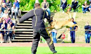 I mästerskapet ingick moment som spårning, lydnad och skydd av föraren. Foto: Niklas Johansson.