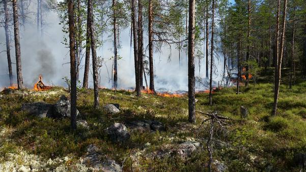 Foto: Räddningstjänsten Jämtland