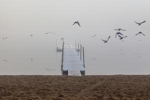 Fågelbad i ett dimhöljt Sandtjärn 05:30. Det gäller att vara först på bryggan.