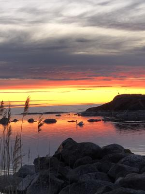 Tidig morgon vid Sennebyhaken. Foto: Inger Nilsson
