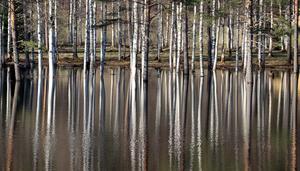 Skogsområdet vid paintballbanan ligger till stora delar under vatten.