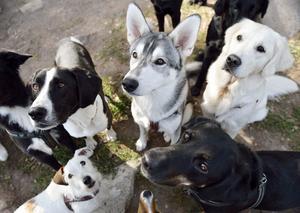 Bidrar hundägarna med finansieringen och kostar arrende av alla dessa stora markytor något?