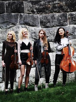 Rosa Kvartetten. Foto: Pressbild.