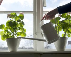 Att vattna blommorna i tid, var ett av de kloka råd som skribenten fick av sina föräldrar. Foto: Fredrik Sandberg /TT