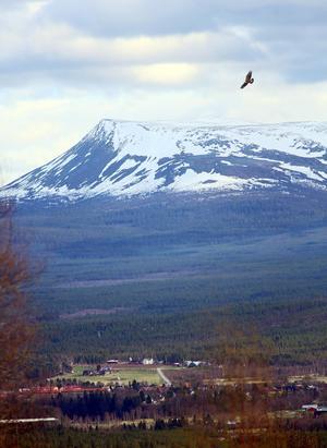 Med ett planerat Naturum kommer Sonfjället och dess nationalpark närmare byn.Parken bildades 1909.
