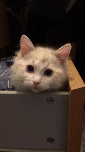 97) Vår söta o fina katt Nova Li Maria ❤️ Foto: Johan Strandqvist