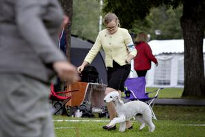 Patricia Eriksson springer bredvid hundrasen Bedlington terriern Alfie i egenuppsydd dräkt som har insydd godisficka och allt.