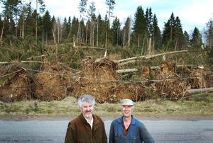 Overkligt men verkligt. Bröderna Stig och Roland Ljunggren fick en mycket stor del av sin skog fälld av stormen Gudrun och var omskakade morgonen efter.
