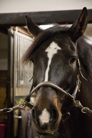 Hästen Viola fick vara modell när tidningen kom på besök i stallet.