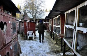 Drygt 130 kaniner bor på gården hos Hanz Johansson.