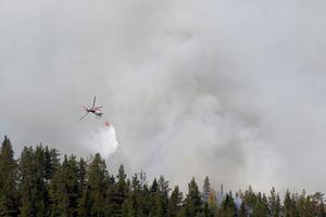 Skogsbranden i Hammarstrans i somras. Bild: TT.