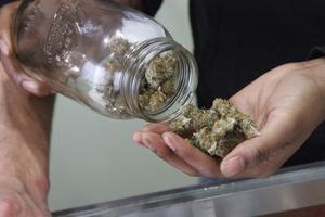 Cannabis innehåller flera hundra kemikalier.