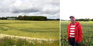 Björn Sjunning spår en god skörd och lovordar kollegorna och bönderna Viktor Plym och Pontus Bergman.