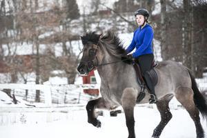 Islandshästen Raffe och Andrine Reichel tränar inför söndagens tävling i körhuset.