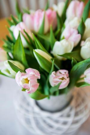 Härligt krispiga tulpaner piggar upp vilken vinterdag som helst.
