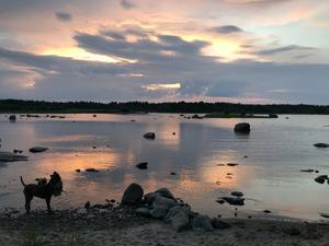 Ett kvällsdopp med Skrållan nere vid hundbadet i Långsand. Foto: Bella Eker