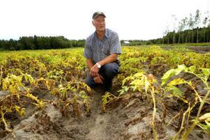 Åke Vedin är bedrövad över att stora delar av hans potatisodlingar har förstörts av regnet.