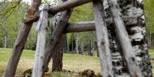 Älgberget-Björnberget. Här finns det mesta – kulturhistoria, härliga urskogsmiljöer och slåttermark.