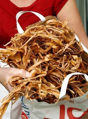 Skogs-Hilda använder bark från tall i sitt prisbelönta barkbröd. Arkivbild.