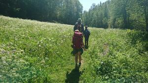 Dag 2: Vandring i Säterdalen.
