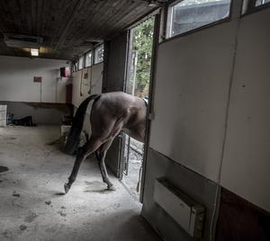 En kvinna stal en sadel från ett stall. Foto: Staffan Löwstedt/TT
