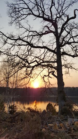 Hedersomnämnande. När ljuset kommer tillbaka så lever människorna, och naturen, upp. Det har Irene Hallqvist fångat i den här bilden. Foto: Irene Hallqvist