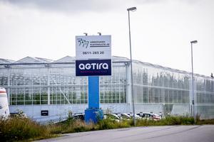 Agtira har tre stora växthus på Saltvikshöjden i Härnösand.