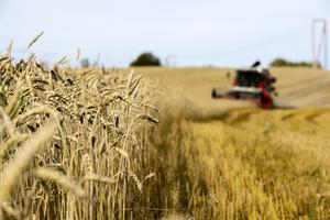 """""""Om det här håller i sig länge stannar logistiken och det kommer att saknas insatsvaror för att hålla igång det svenska jordbruket"""", säger Emma Frödå. Arkivbild."""